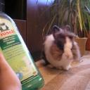 Люди и кролики выбирают Фрош